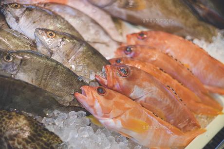 カラフルな鮮魚が並ぶ沖縄の市場の写真の写真素材 [FYI04800023]