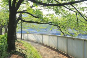 大横川 遊歩道の写真素材 [FYI04800201]
