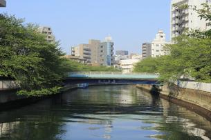 大横川 越中島橋の写真素材 [FYI04800202]