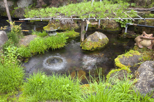 忍野八海 御釜池の写真素材 [FYI04800228]