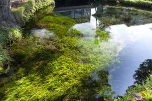 忍野八海 湧池の写真素材 [FYI04800233]