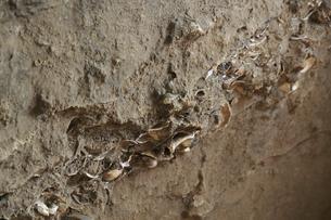大森貝塚遺跡庭園の縄文貝塚遺構の写真素材 [FYI04800344]