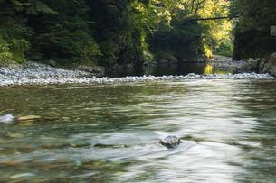 多摩川の写真素材 [FYI04800366]