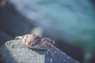 南国の海の綺麗な色とカニの死骸の写真素材 [FYI04800384]