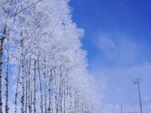 霧氷と青空の写真素材 [FYI04800474]