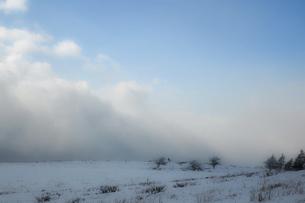 ホワイトアウト 地吹雪 気象現象 白い闇の写真素材 [FYI04800483]