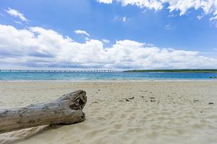 美しいエメラルドグリーンの前浜ビーチに漂着した流木の写真素材 [FYI04800532]