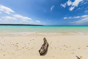 美しいエメラルドグリーンの前浜ビーチに漂着した流木の写真素材 [FYI04800534]