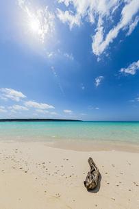 美しいエメラルドグリーンの前浜ビーチに漂着した流木と輝く太陽の写真素材 [FYI04800535]