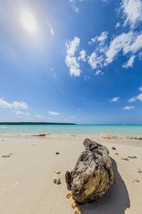 美しいエメラルドグリーンの前浜ビーチに漂着した流木と輝く太陽の写真素材 [FYI04800537]