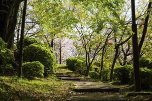 菊池公園の風景 桜咲く うららかな春の季節 日本・熊本県菊池市2020年春の写真素材 [FYI04800626]