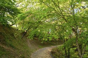 うららかな春の季節 桜咲く季節公園風景 日本・熊本県菊池市2020年春の写真素材 [FYI04800743]