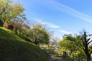 うららかな春の季節 桜咲く季節公園風景 日本・熊本県菊池市2020年春の写真素材 [FYI04800745]