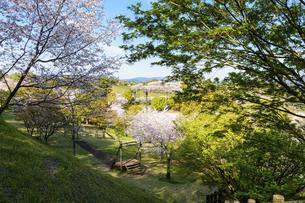 うららかな春の季節 桜咲く季節公園風景 日本・熊本県菊池市2020年春の写真素材 [FYI04800746]