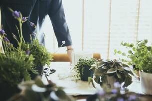 観葉植物の植え替えする風景の写真素材 [FYI04801098]