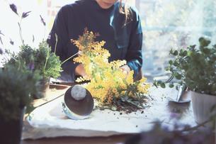 黄色の花のミモザを持つ女性の写真素材 [FYI04801110]