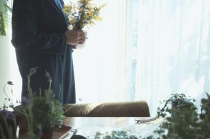 黄色の花のミモザを持つ女性の写真素材 [FYI04801118]