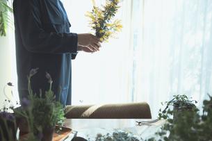 黄色の花のミモザを持つ女性の写真素材 [FYI04801120]