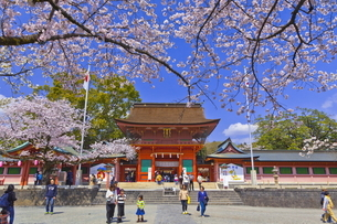 桜咲く富士山本宮浅間大社の楼門の写真素材 [FYI04801170]