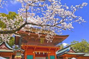 桜咲く富士山本宮浅間大社の楼門の写真素材 [FYI04801172]