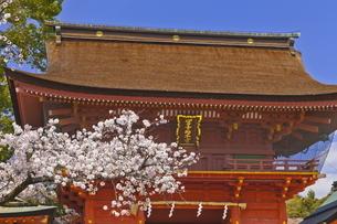 桜咲く富士山本宮浅間大社の楼門の写真素材 [FYI04801173]