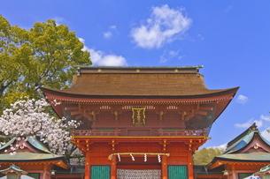 桜咲く富士山本宮浅間大社の楼門の写真素材 [FYI04801174]