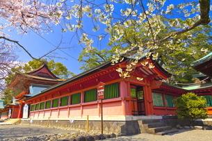 桜咲く富士山本宮浅間大社の楼門と回廊の写真素材 [FYI04801175]