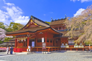 桜咲く富士山本宮浅間大社の拝殿と本殿の写真素材 [FYI04801181]