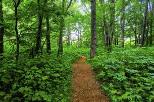 森の道の写真素材 [FYI04801205]