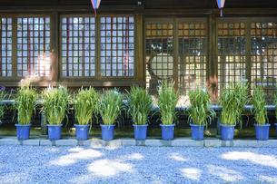 諏訪大社 下社春宮 昼下がりの夏景色の写真素材 [FYI04801261]
