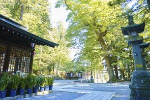 諏訪大社 下社春宮 昼下がりの夏景色の写真素材 [FYI04801262]