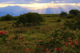 高ボッチ高原の夕暮れの景色 長野県塩尻市の写真素材 [FYI04801266]