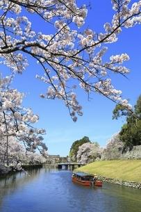 彦根城 内堀の桜並木と屋形船の写真素材 [FYI04801314]