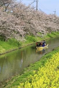 水郷巡り 近江八幡の写真素材 [FYI04801322]