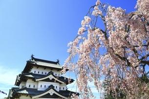 弘前城と桜の写真素材 [FYI04801324]