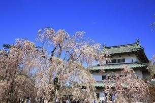弘前城と桜の写真素材 [FYI04801325]