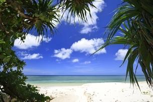 宮古島の海の写真素材 [FYI04801348]