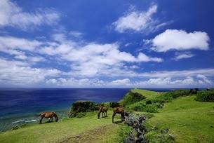与那国島の海の写真素材 [FYI04801362]