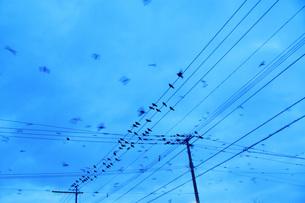 カラスと電線の写真素材 [FYI04801511]
