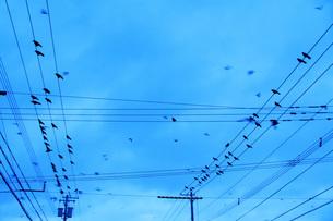 カラスと電線の写真素材 [FYI04801512]