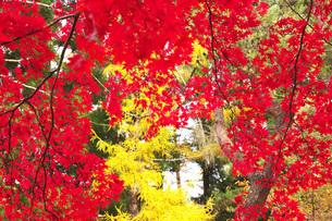 見晴公園の秋紅葉の写真素材 [FYI04801546]