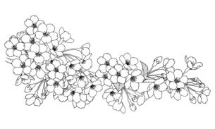 手描き線画 桜の花 イラストのイラスト素材 [FYI04801577]
