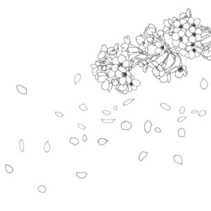 手描き線画 桜 イラストのイラスト素材 [FYI04801579]