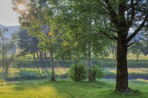 白樺に木漏れ日が降り注ぐの写真素材 [FYI04801605]
