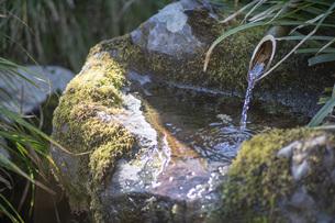 庭先の水の写真素材 [FYI04801847]