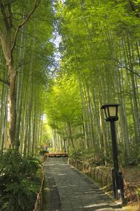 修善寺 竹林の小径の写真素材 [FYI04801892]