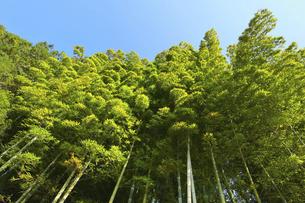 青空と竹林の写真素材 [FYI04801912]