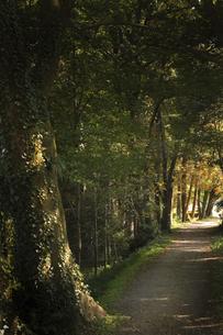森の中に延びる道の写真素材 [FYI04801913]