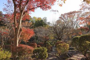 日向和田臨川庭園の紅葉の写真素材 [FYI04801946]