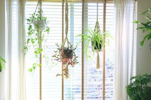 吊るし植物のハンギングプランターのグリーンがある室内の写真素材 [FYI04802014]